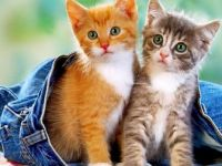 Two Sweet Little Kittens
