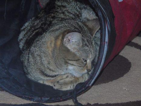 Topaz sleeping in her office 222nd Novermber 2020