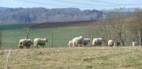 Krajina s ovečkami - The landscape with sheep, CR