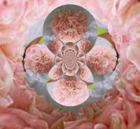 052518 Soft Roses