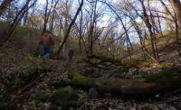 Kilen Woods Shade