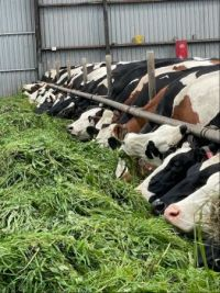 Boerderij in Eemdijk Nederland
