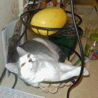 Kitchen clutter = kitten clutter