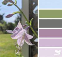 7_24_Color_Flora_f