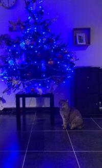 Brezer bij de kerstboom