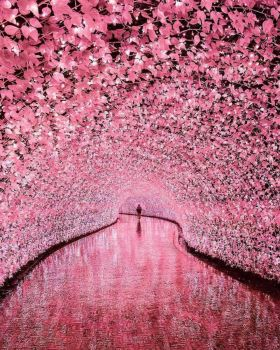 Cherry Tunnel
