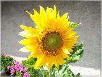 Sunny day  -  Slunečný den