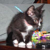 Foster kitten #7
