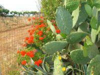 Crete June 2015 014