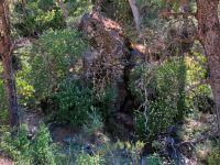Buck Eyes in the dry creek bed