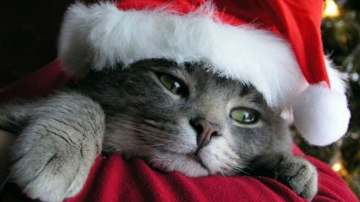 Have a Purrrfect Holiday