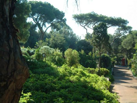 A walk through the Gibraltar Botanic Gardens