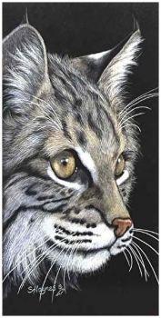 Sandra Haynes ~ Tabby Cat