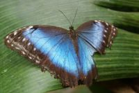 butterfly in the zoo