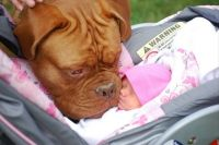 dog and baby (larger)