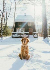 Dog & Snow