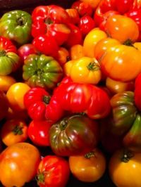 Colorful Tomatoes  at the market