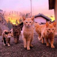 Our Neighbourhood Gang  :)