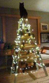 Freya's Tree