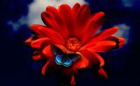butterfly+flower