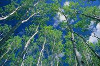 Dezadeash Yukon Canada Boreal Forest