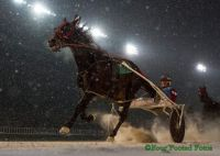 Harness Racing at Club Hawthorne