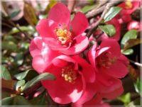 Jarní úsměv  -  Spring smile
