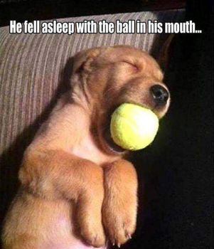 Asleep with ball