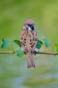 palm feather bird