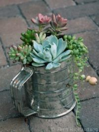Succulents In a Sifter