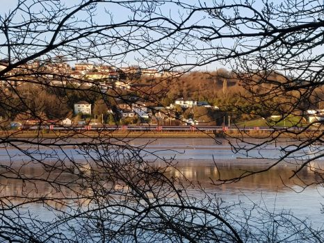 Train through the trees and river Plym