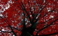 048 - Red and Black Tree