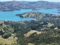 High on the hills above Akaroa