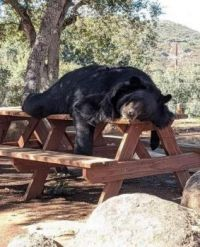 Bear-ry relaxing, indeed!