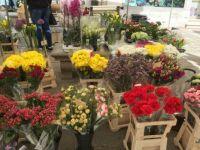 beautiful flowers at the market