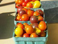 Bright 'n shiny tomatoes