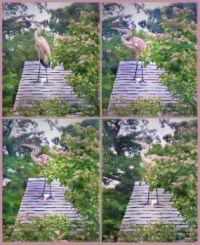 Heron on garage roof ... (he pooped on it)