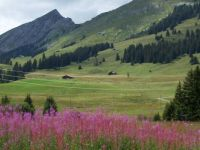 Simmental-valley