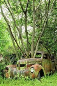 Unique Trees with antique car