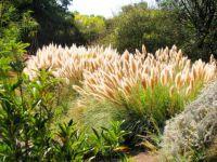 Albuquerque Botanical Gardens-d
