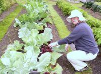 Alaska can grow enormously large vegetables- 2, Sitka, Alaska, 2009
