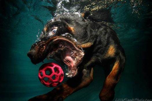 Diving dog photo by Seth Casteel