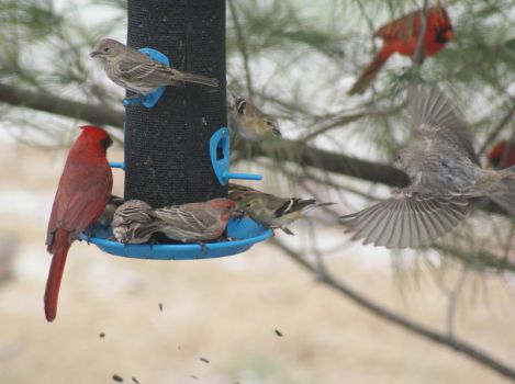 A busy day at the feeder.