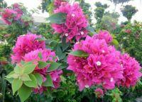 My garden in bloom                                 020-001