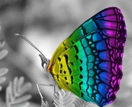Cores na borboleta