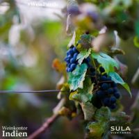#WeinPuzzle - Sula vineyards (8)