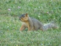Squirrel in the Yard