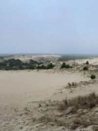 Oregon Coastal Dunes