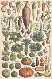 Vintage French Vegetable Poster