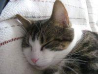 Dylan cat